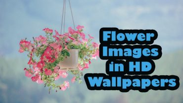beautiful flower images in HD Wallpapers Collection